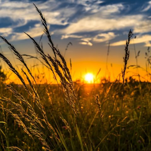 A sunset over grass field.